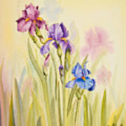 Iris Garden Ll Art Print