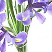 Iris In A Vase Art Print