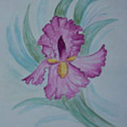 Iris In Lavender Art Print