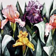 Iris Integration Art Print