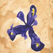 Iris Iv Pixie  Art Print