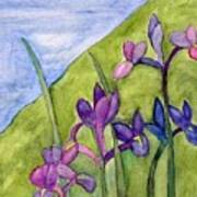 Iris Meadow Art Print