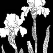 Iris Notan Art Print