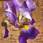 Iris On Vintage 1912 Postcard Art Print