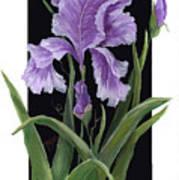 Iris One Art Print