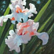 Iris Pour Une Belle Femme Art Print
