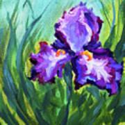 Iris Solo Art Print