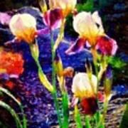 Iris Song Art Print