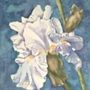Iris Twenty One Art Print