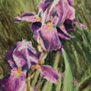 Iris Twins Art Print