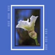 Iris White With Design Art Print