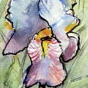 Iris With Impact Art Print