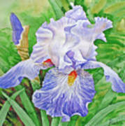 Iris.drops Of Dew .2007 Art Print