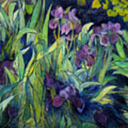 Irises At High Altitude Auribeau France 2004   Art Print