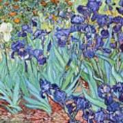 Irises Art Print by Pg Reproductions