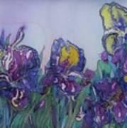 Irises2 Art Print