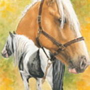 Irish Cob Art Print