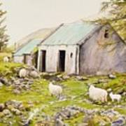 Irish Sheep Farm Art Print