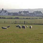 Irish Sheep Farm I Art Print