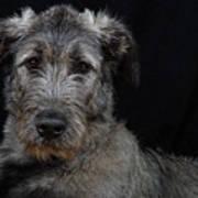 Irish Wolfhound Droc Vi Art Print