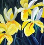 Irisis Art Print