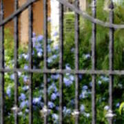 Iron Gate And Blue Flowers Art Print
