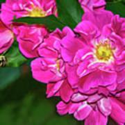 Irresistible Rose - Paint Art Print