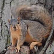 Irritated Squirrel Art Print
