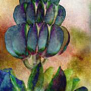 Island Lupin Art Print