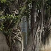 Israel, Tree Trunk Art Print