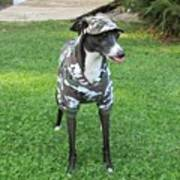 Italian Greyhound Army Art Print