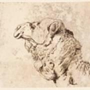 itle Head of a Dromedary Art Print