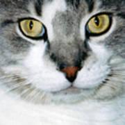 It's In The Cat Eyes Art Print