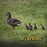 Its Spring Art Print
