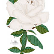 Ivory Rose Art Print