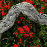 Ivy Geraniums And Log Art Print