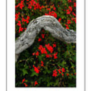 Ivy Geraniums And Log Poster Art Print
