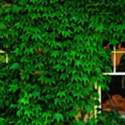 Ivy Window Art Print
