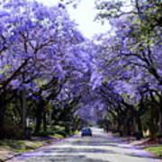 Jacarandas In Pretoria Art Print