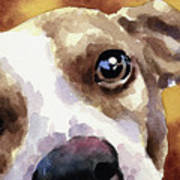 Jack Russel Terrier Art Print