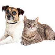 Jack Russell Terrier Dog And Tabby Cat Art Print