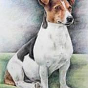 Jack Russell Terrier Art Print