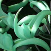 Jade Vine Art Print