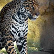 Jaguar At Rest Art Print