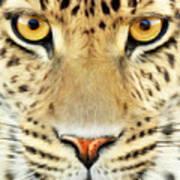 Jaguar Art Print by Bill Fleming