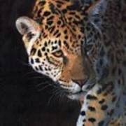 Jaguar Portrait Art Print