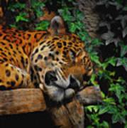 Jaguar Relaxing Art Print
