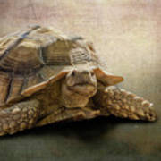 Jamal The Tortoise Art Print