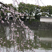 Japan Cherry Tree Blossom Art Print