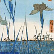 Japan: Iris Garden, 1857 Art Print
